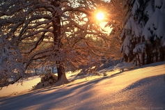 colors_on_frozen_snow_by_lavaspawn-d34grx2
