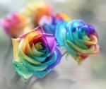 rainbow_by_lieveheersbeestje-d4gxrt9