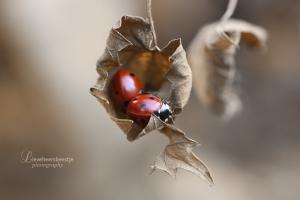 autumn_by_lieveheersbeestje-d5fup7r